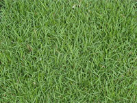 empire-zoysia-grass-sod