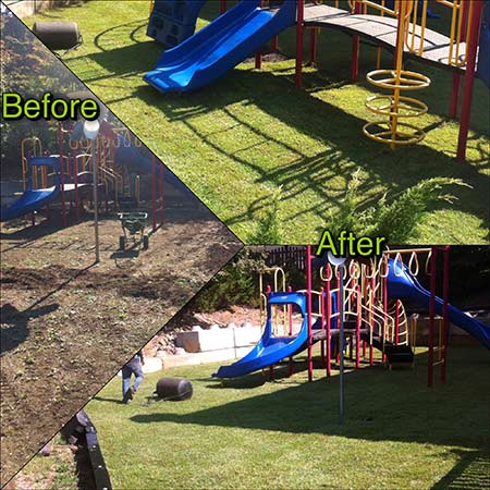 sod-before-after-4